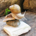 Snail slime to heal your skin, the magic of RoyeR Cosmétique from Vendée