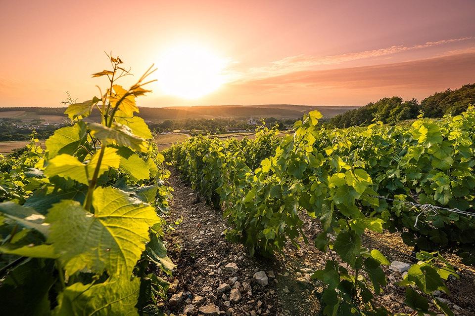 vigne-couché-de-soleil_DSC0281